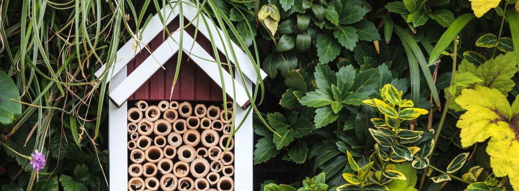 Honey Bee pledge