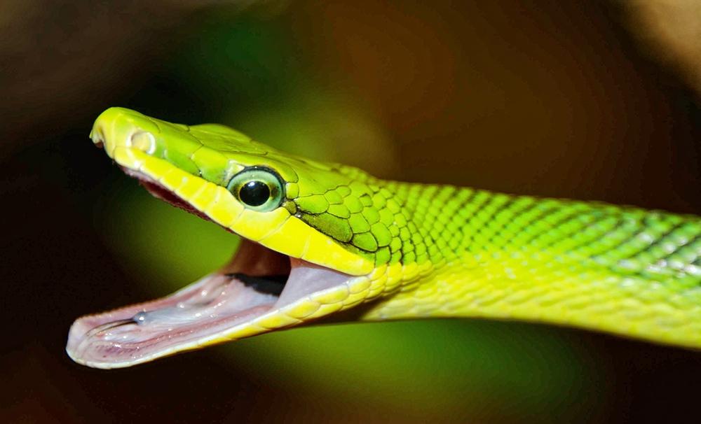 Paignton Zoo Snake