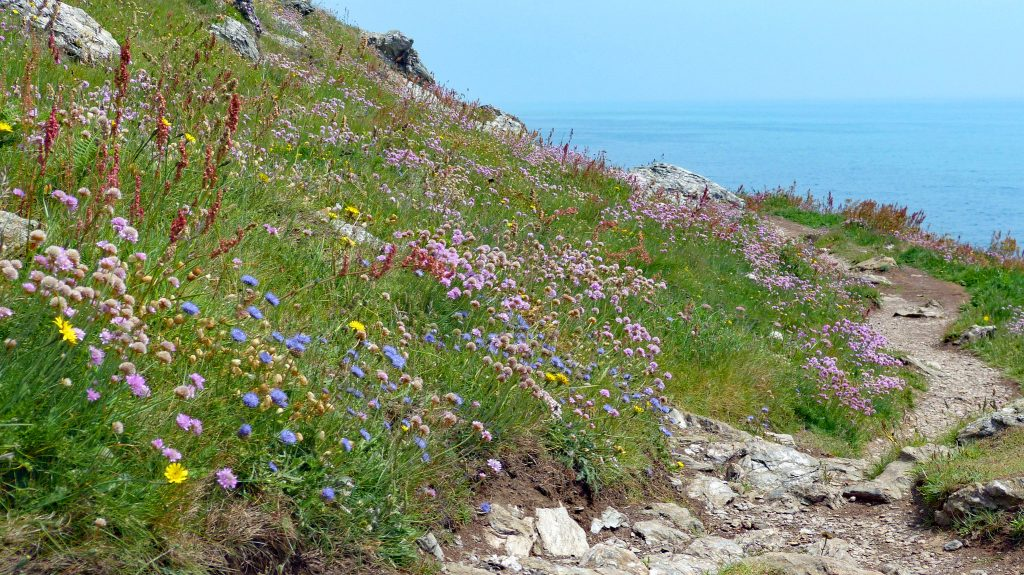 Devon coastal path