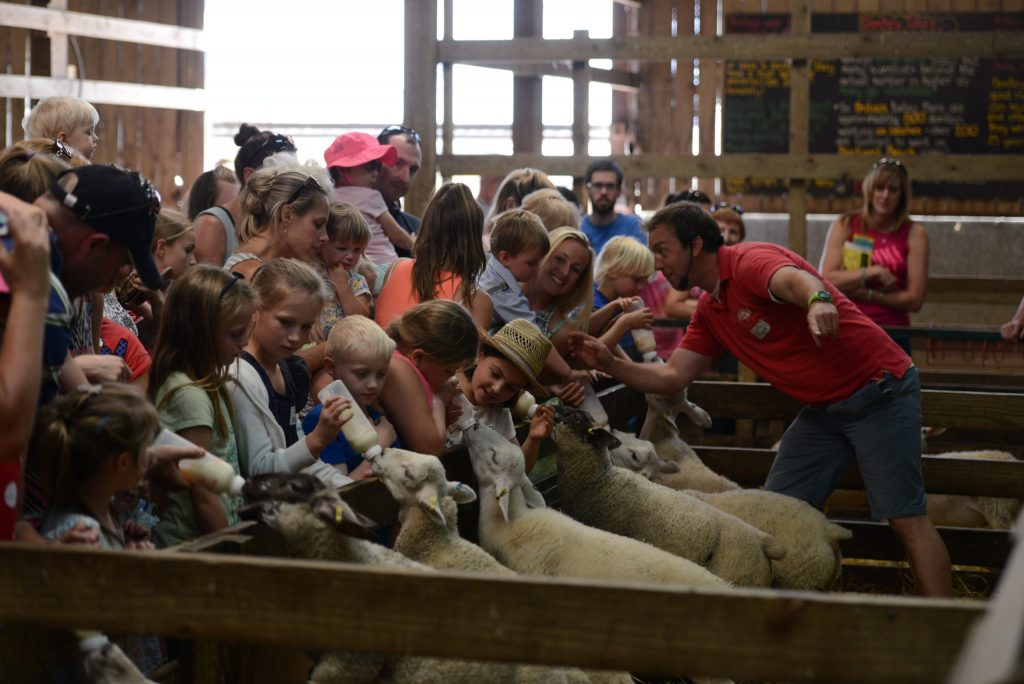 Bottlefeeding lambs