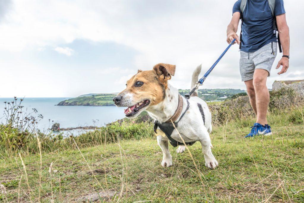 berryhead-dog-walk