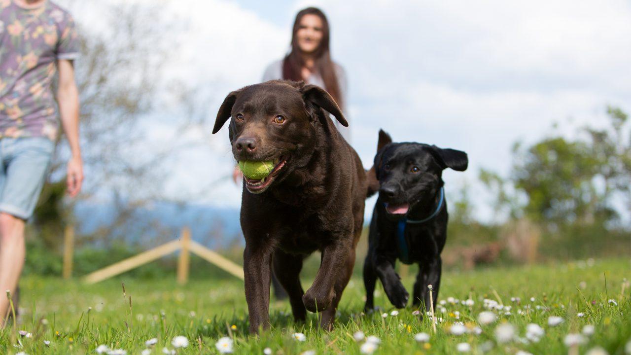 dog-friendly-holiday-park-devon