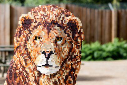 big-brick-safari-paignton-zoo