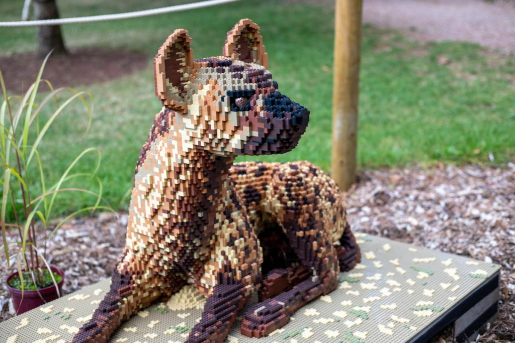 Paignton Zoo big brick safari hyena