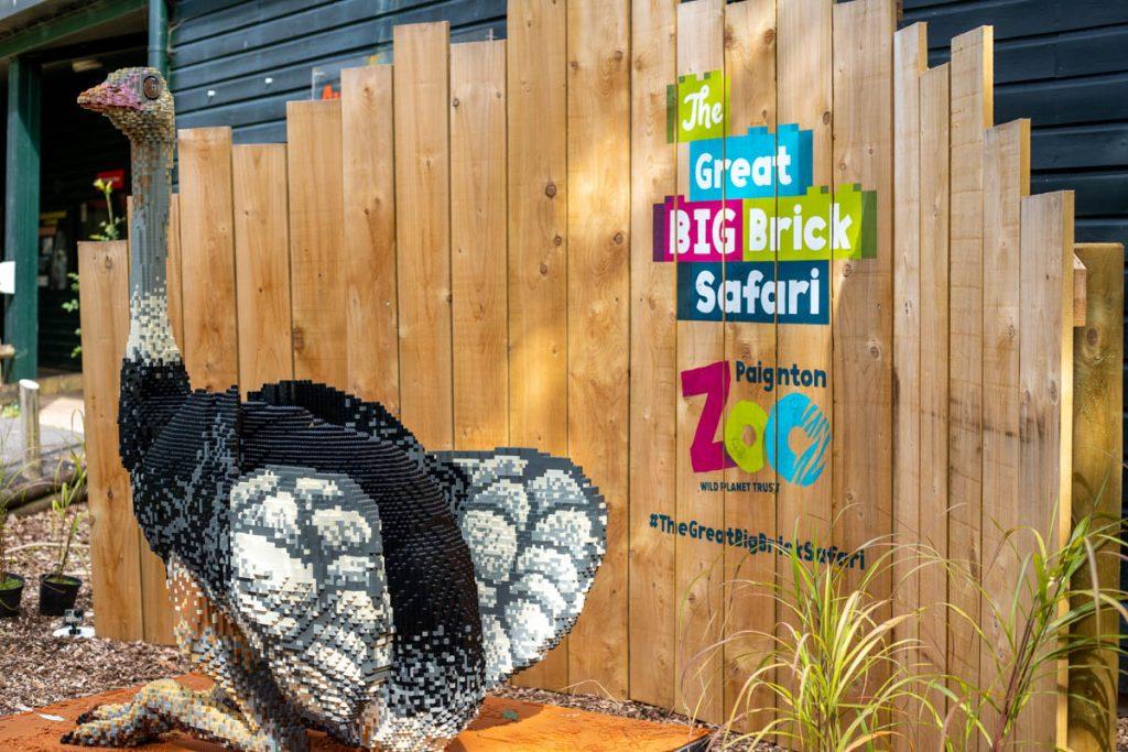 Paignton Zoo big brick safari ostrich